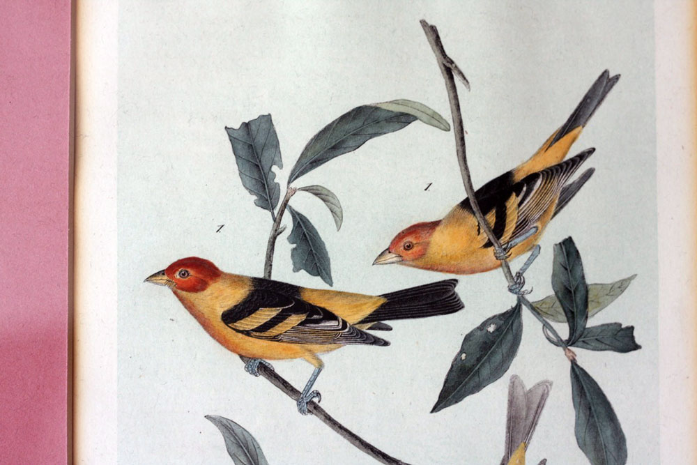 jestcafe---Bird-Print5