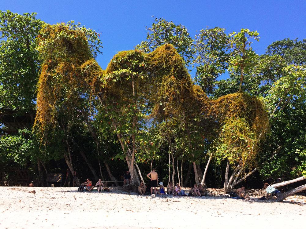 jestafe.com--costarica56
