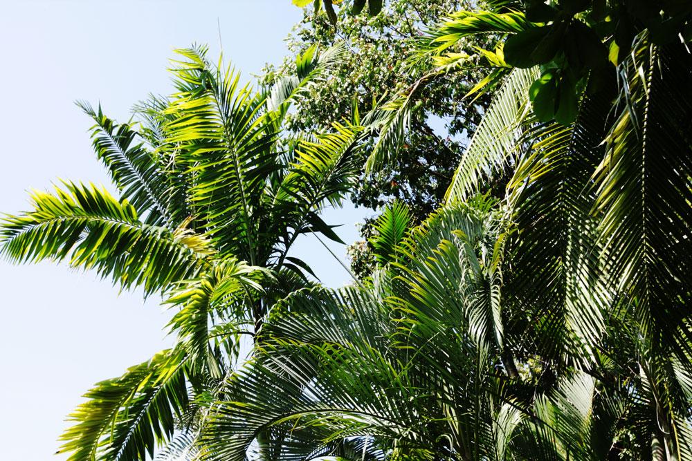 jestcafe.com-costa-rica25