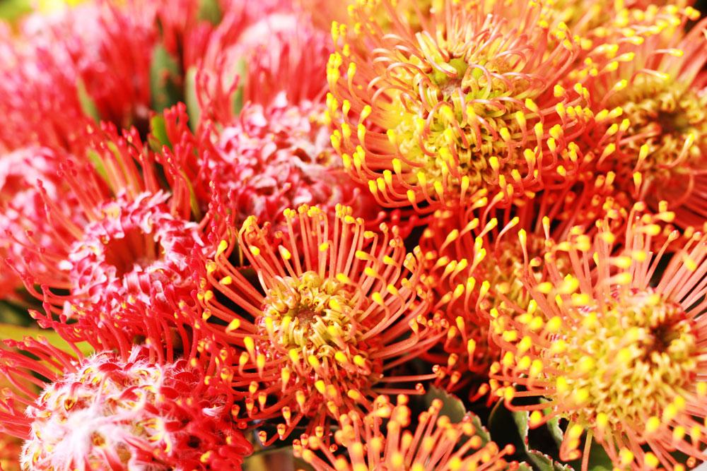 jestcafe.com-flowerworkshop12
