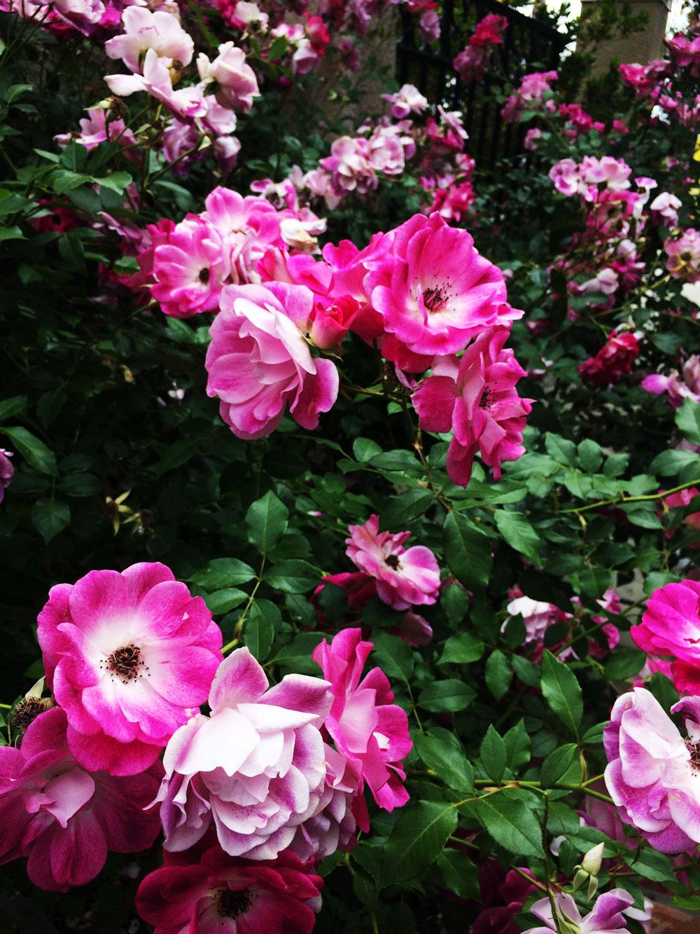 jestcafe.com-South-Coast-Botanic-Gardens4