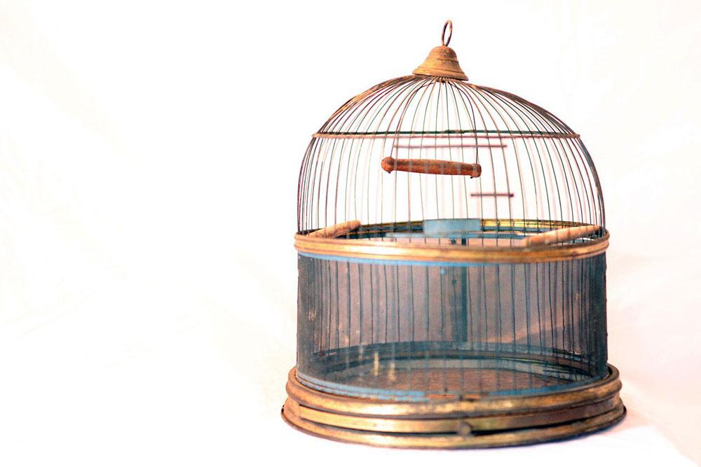 Hendryx-Bird-Cage2