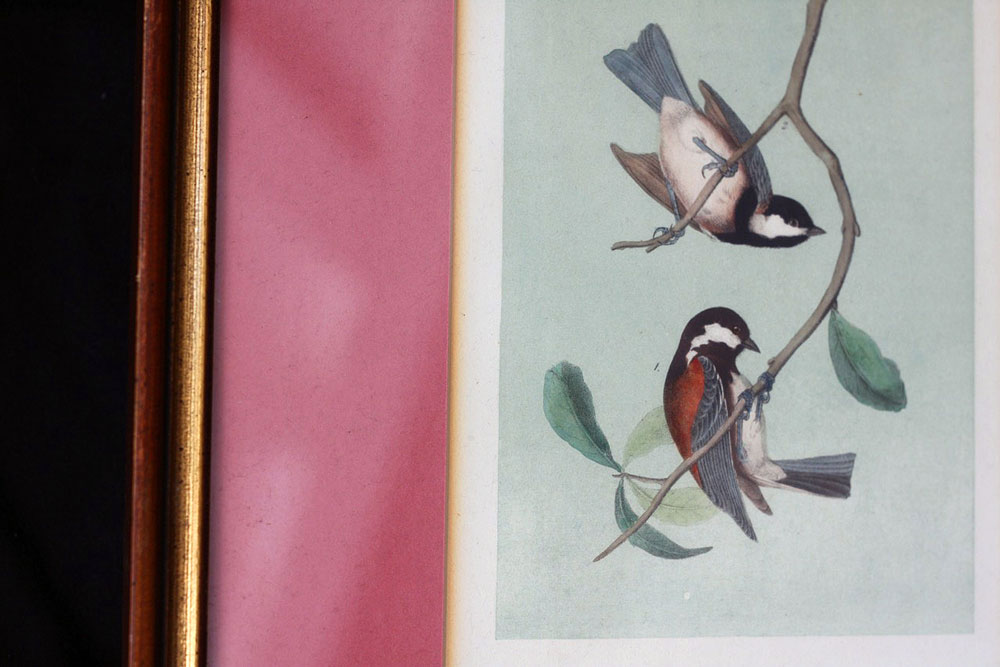 Jestcafe.com-Bird-Print3-
