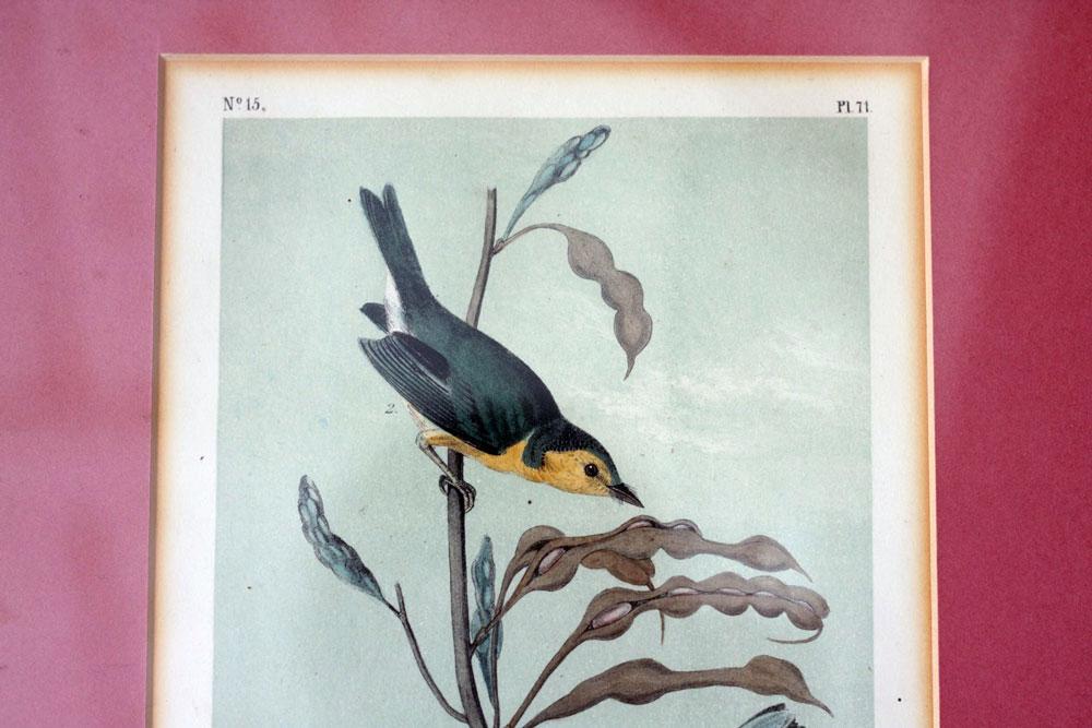 jestcafe.com---birdprint-8