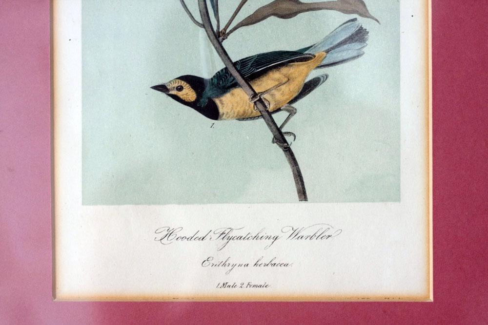jestcafe.com---birdprint7