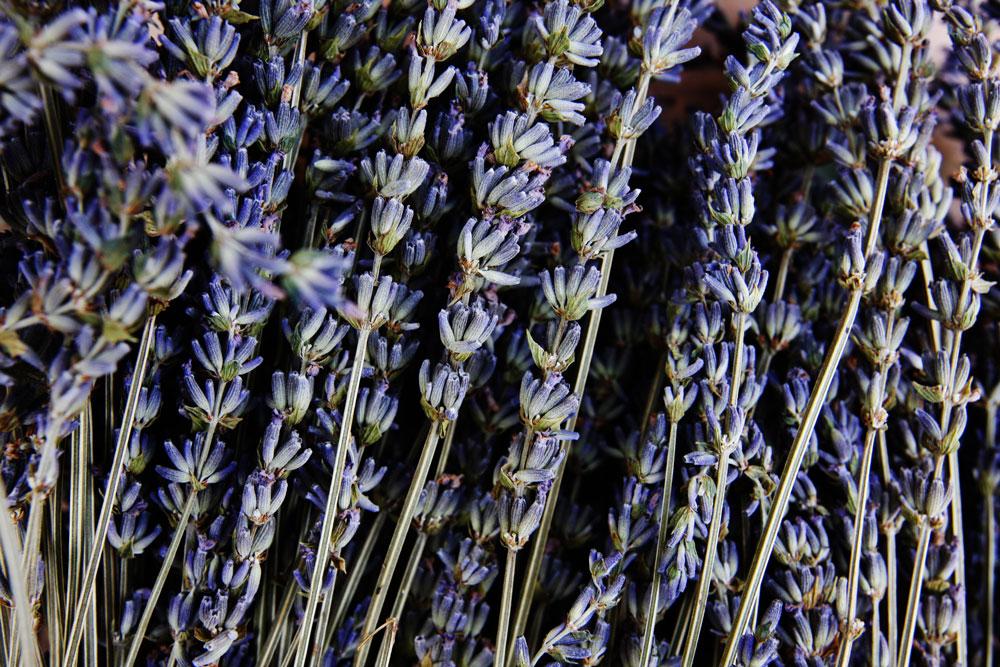 jestcafe.com-lavender-wreath7