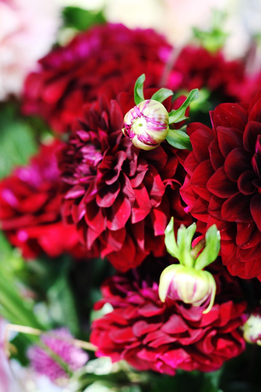 jestcafe.com-flowerdaywithmom20